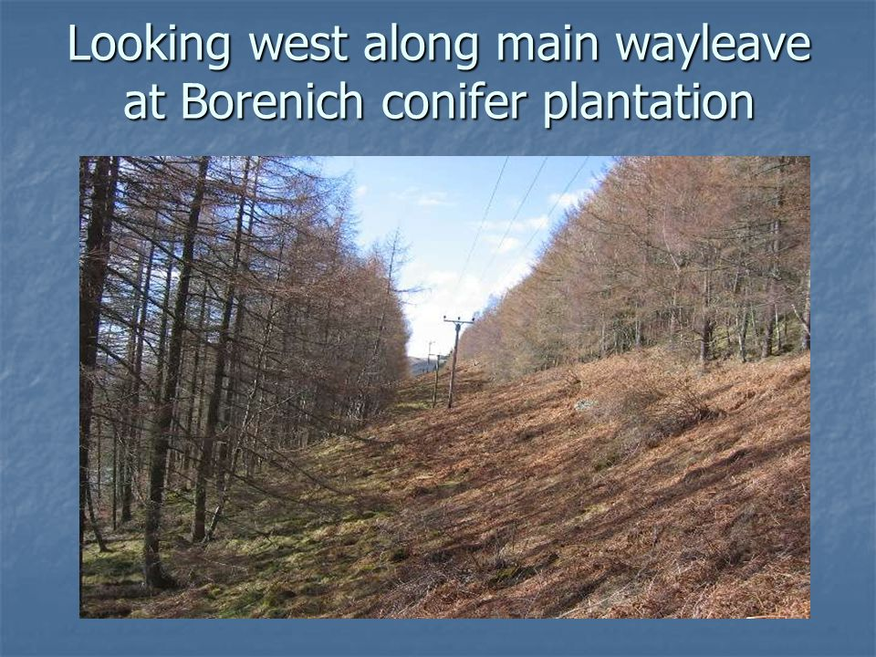 Looking west along main wayleave at Borenich conifer plantation