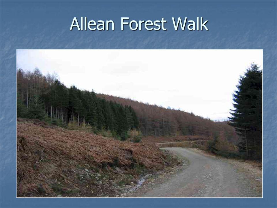 Allean Forest Walk