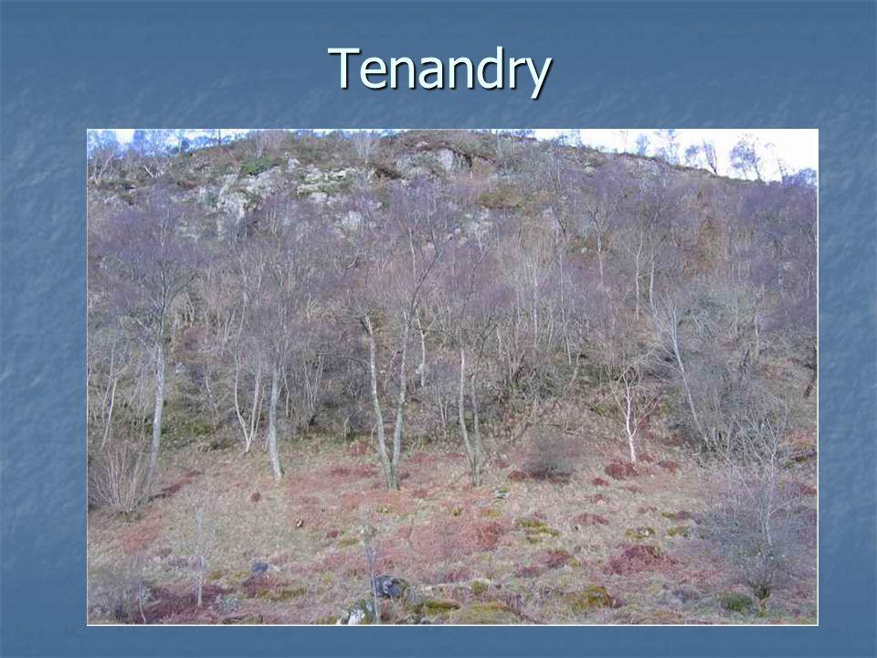 Tenandry