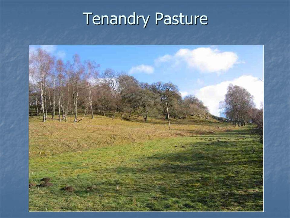 Tenandry Pasture