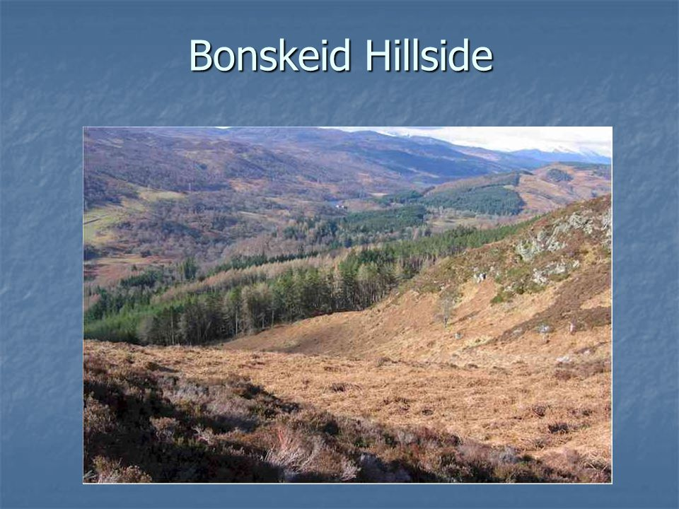 Bonskeid Hillside