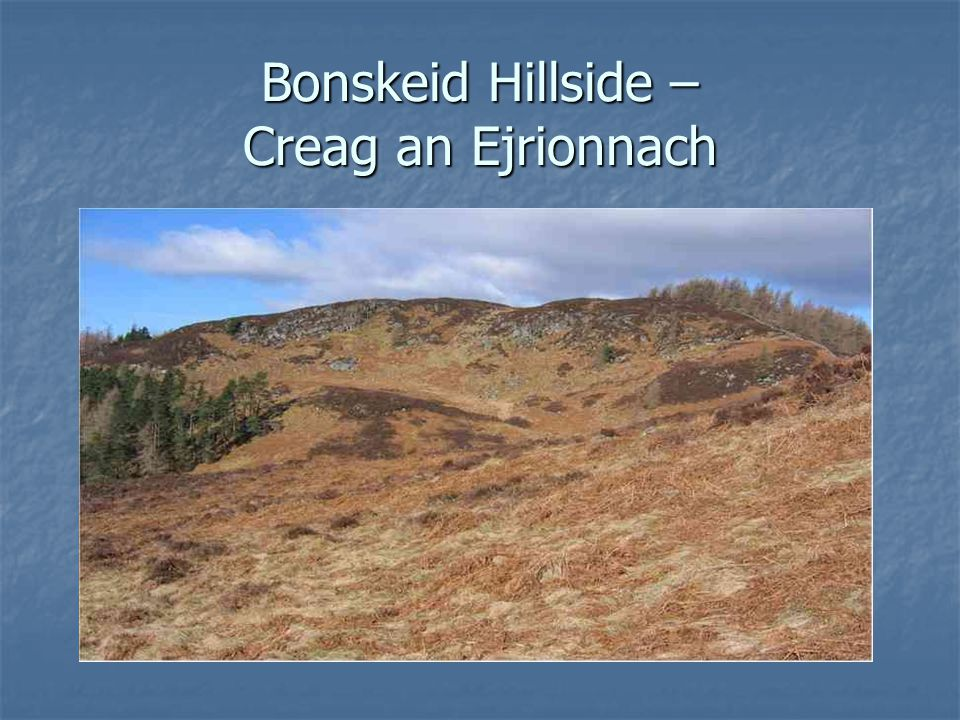 Bonskeid Hillside – Creag an Ejrionnach