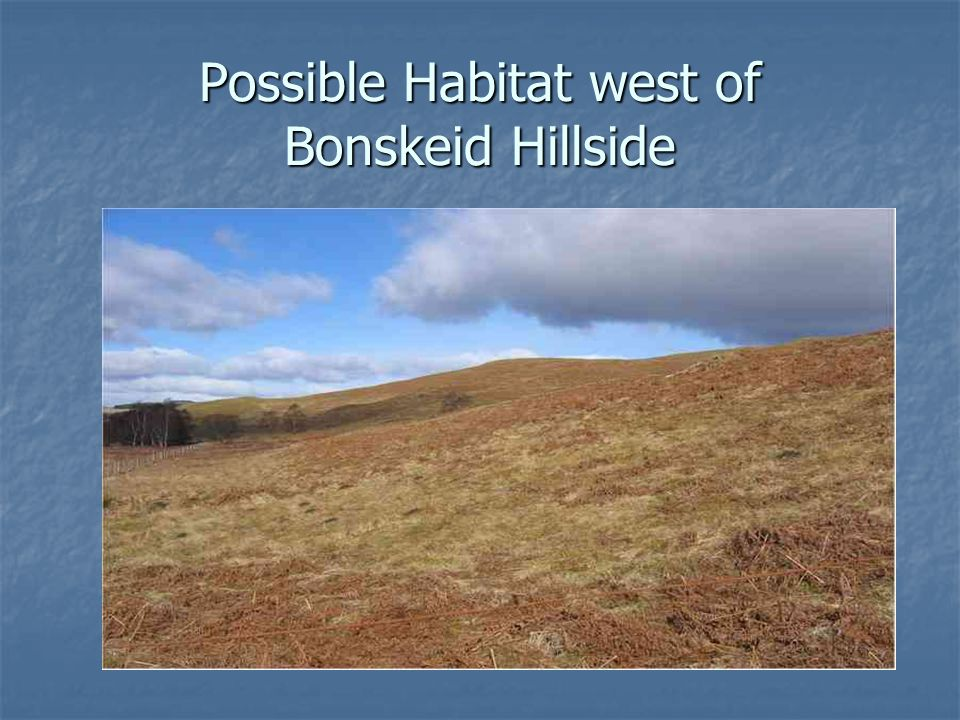 Possible Habitat west of Bonskeid Hillside
