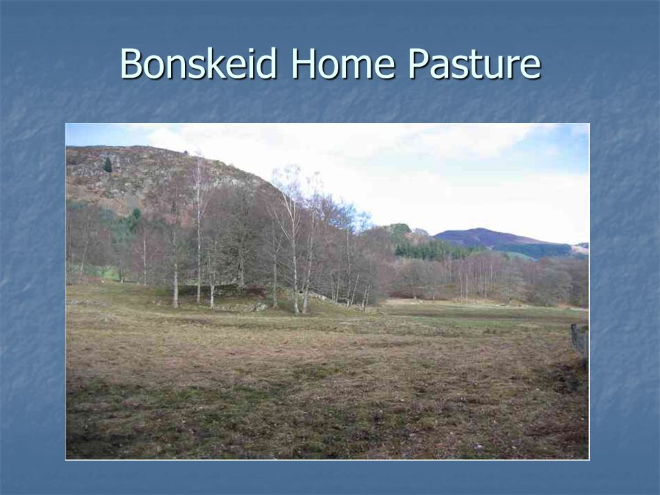 Bonskeid Home Pasture