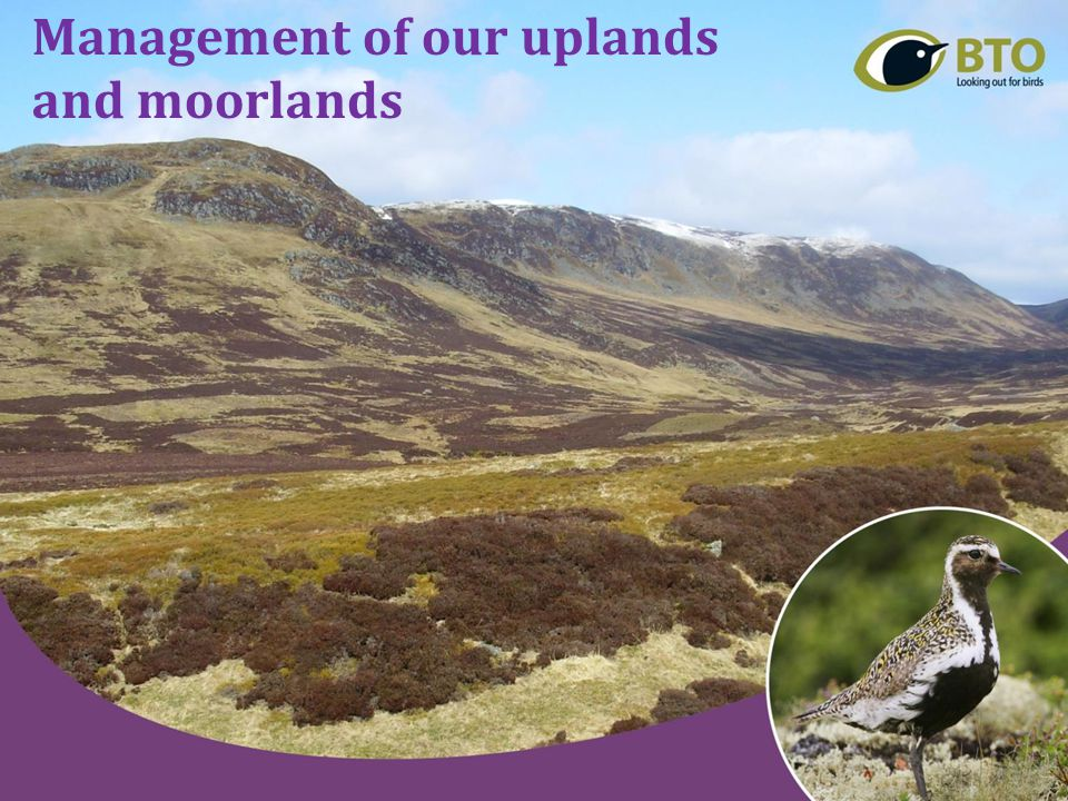 Management of our uplands and moorlands