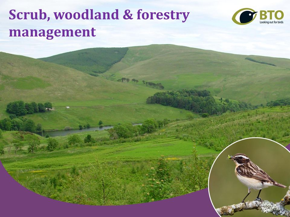 Benefits of scrub and woodland management for Scotland's birds How does bird species composition and abundance vary in scrub and woodland of different age, composition, structure and geographical area.