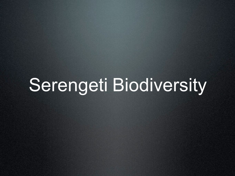 Serengeti Biodiversity
