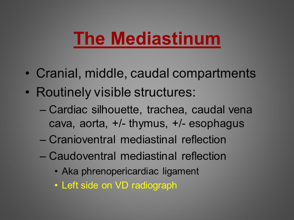 The Mediastinum Cranial, middle, caudal compartments Routinely visible structures: –Cardiac silhouette, trachea, caudal vena cava, aorta, +/- thymus,