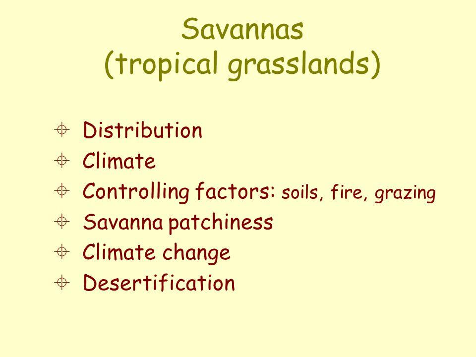 Common sclerophyllous shrubs, S. American savannas Curatella americana Byrsonima crassifolia