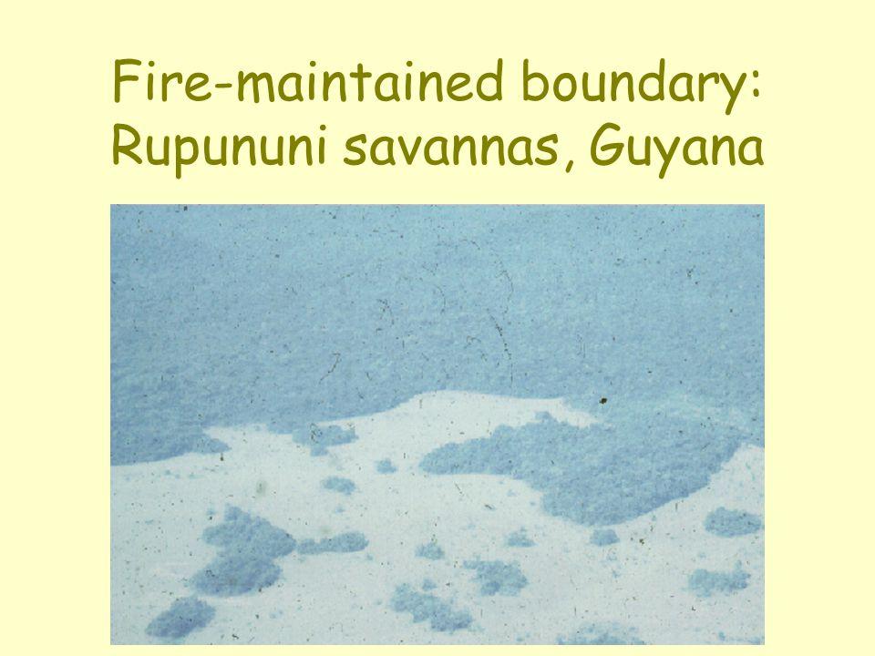 Fire-maintained boundary: Rupununi savannas, Guyana