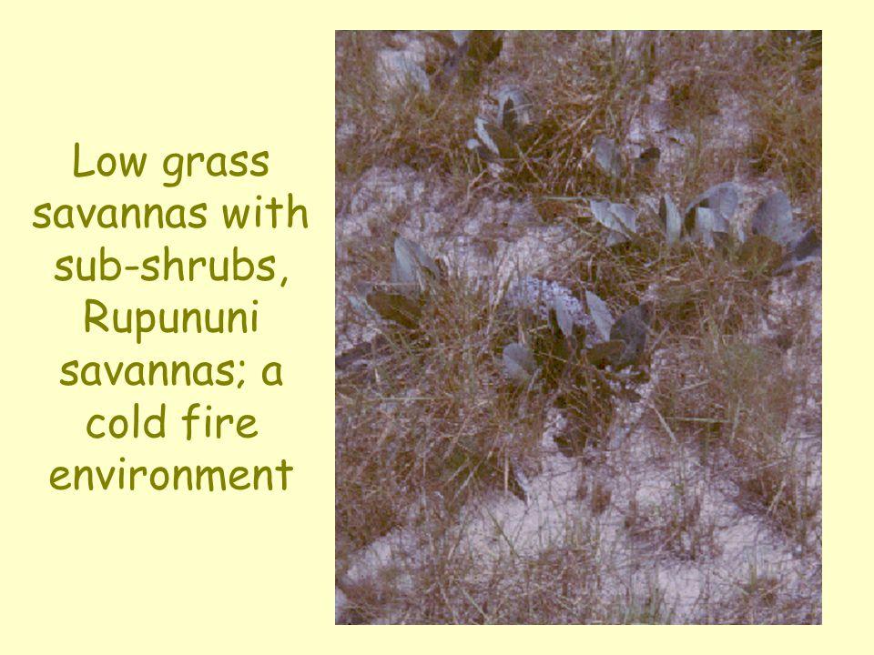 Low grass savannas with sub-shrubs, Rupununi savannas; a cold fire environment