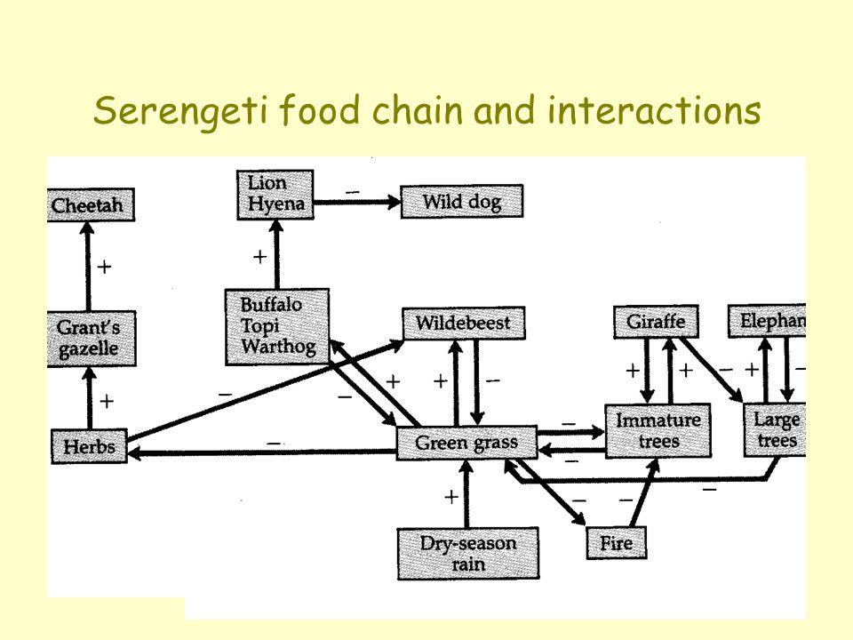 Serengeti food chain and interactions
