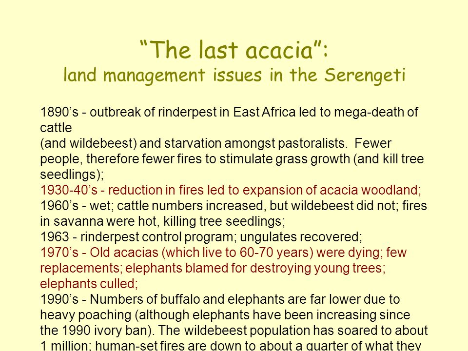 """""""The last acacia"""": land management issues in the Serengeti 1890's - outbreak of rinderpest in East Africa led to mega-death of cattle (and wildebeest)"""