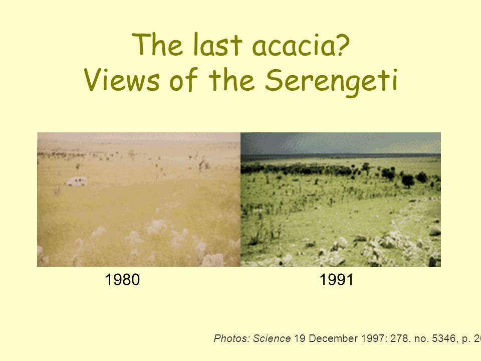 The last acacia? Views of the Serengeti 1980 1991 Photos: Science 19 December 1997: 278. no. 5346, p. 2059