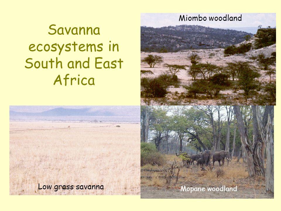 S American climate and savannas Llanos Cerrado 1500