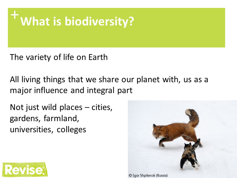 4 + Our natural heritage The UK has a highly diverse and important biodiversity.