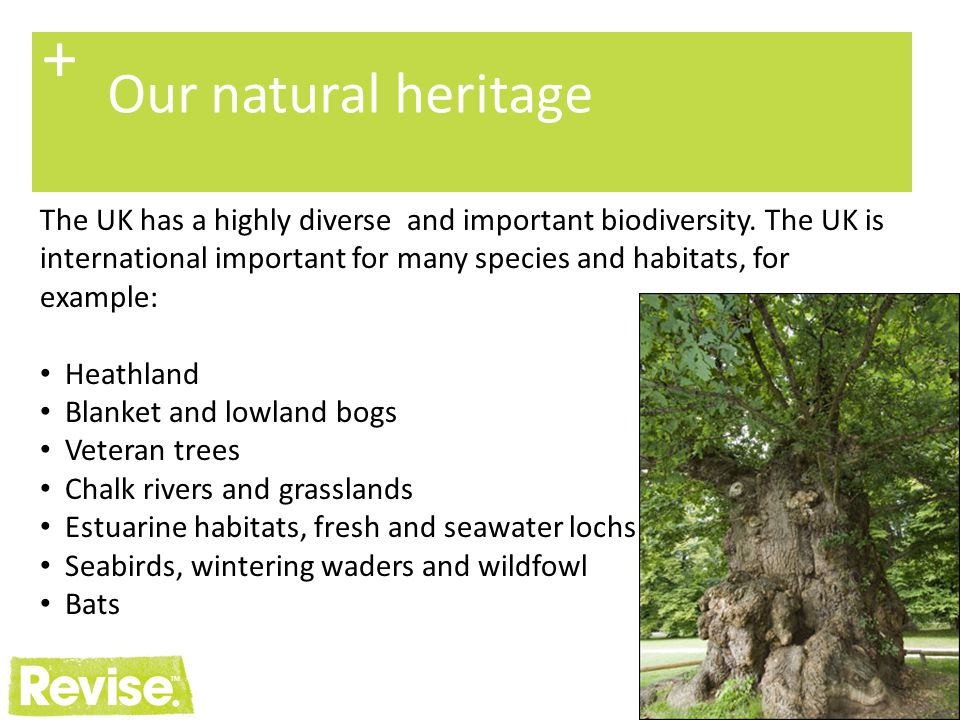 25 + Undertaking habitat surveys Objectives: To ensure well informed management To identify habitats and species with any specialist management requirements To identify interactions with the surrounding ecosystem To identify any other biodiversity threats and opportunities To identify time and resource requirements