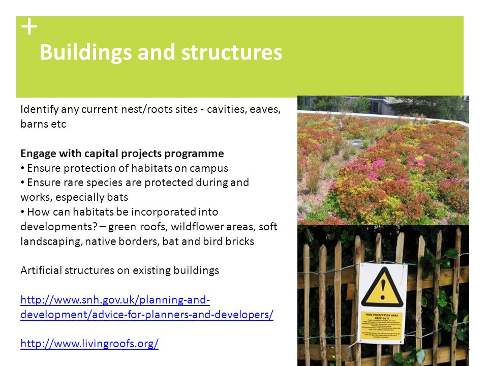 44 Buildings and structures + Identify any current nest/roots sites - cavities, eaves, barns etc Engage with capital projects programme Ensure protect