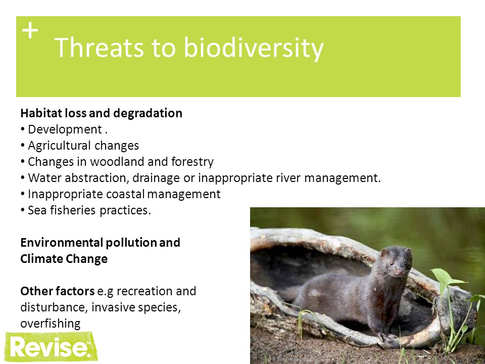 6 + Opportunities for biodiversity Conventions, Strategies, Action Plans etc Habitat designations and species protection Legislation, regulation and planning policy Monitoring and reporting Conservation bodies, programmes and initiatives Increased awareness and appreciation