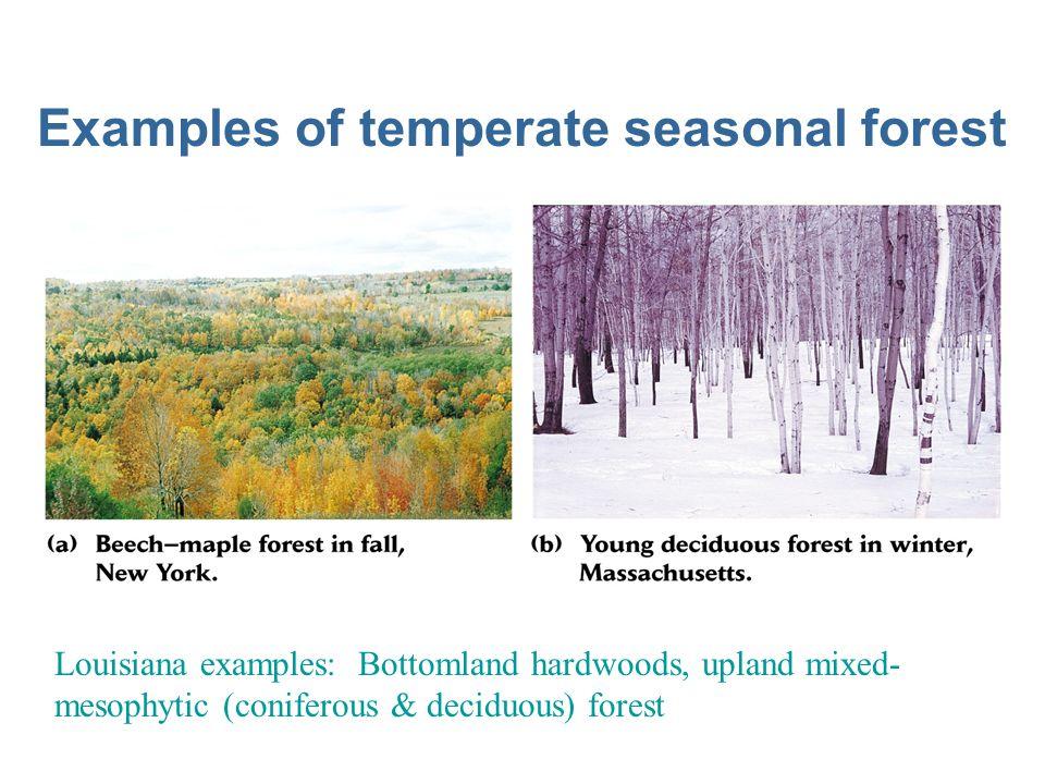 Tropical seasonal forest biome