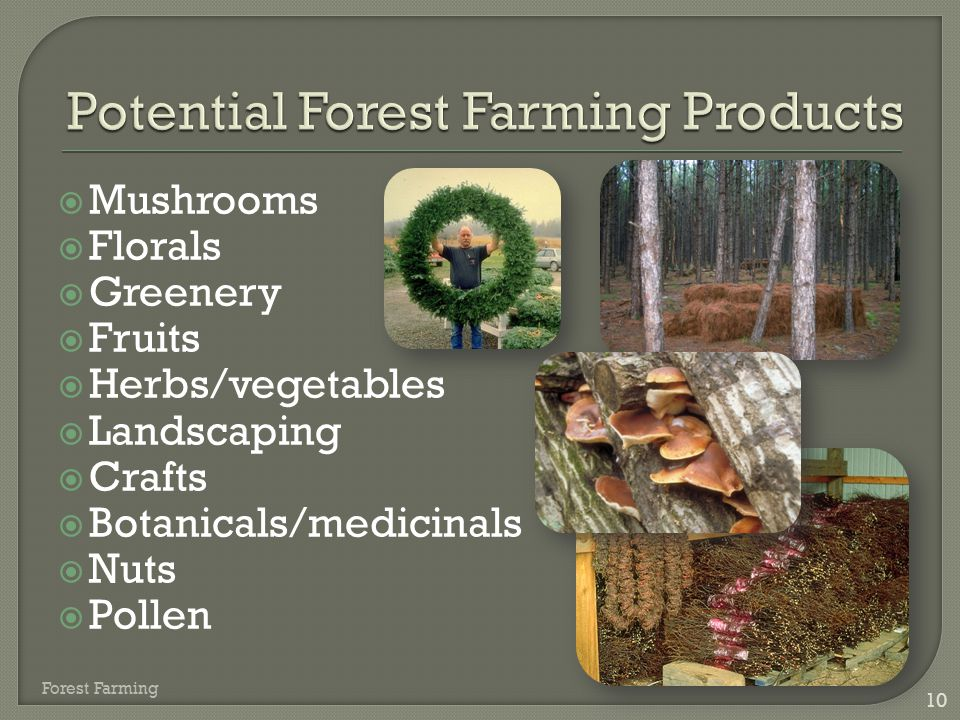  Mushrooms  Florals  Greenery  Fruits  Herbs/vegetables  Landscaping  Crafts  Botanicals/medicinals  Nuts  Pollen 10 Forest Farming