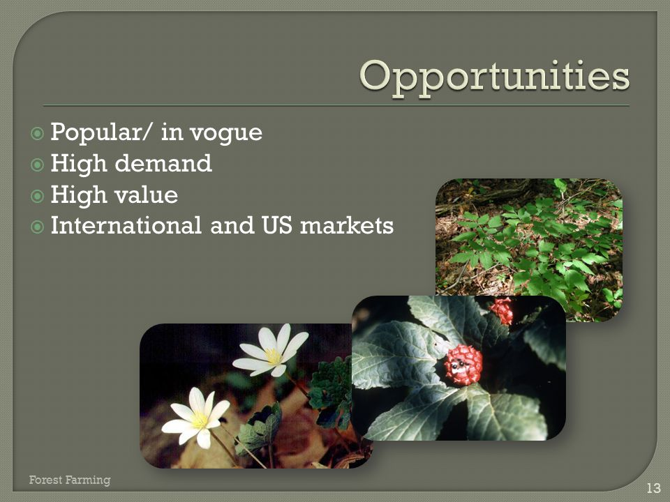 13  Popular/ in vogue  High demand  High value  International and US markets Forest Farming