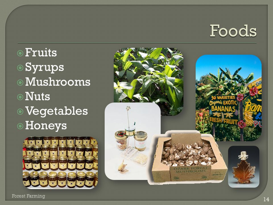  Fruits  Syrups  Mushrooms  Nuts  Vegetables  Honeys 14 Forest Farming