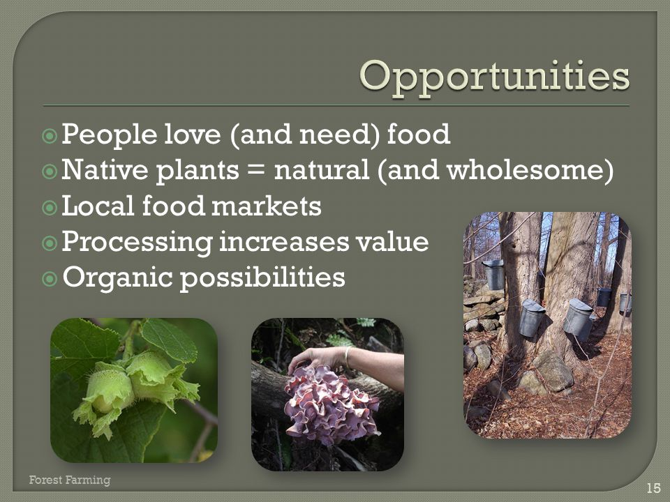  People love (and need) food  Native plants = natural (and wholesome)  Local food markets  Processing increases value  Organic possibilities 15 F
