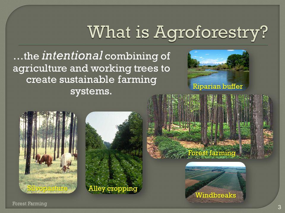  Fruits  Syrups  Mushrooms  Nuts  Vegetables  Honeys 14 Forest Farming