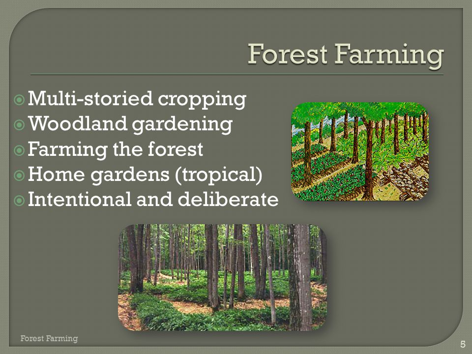  Multi-storied cropping  Woodland gardening  Farming the forest  Home gardens (tropical)  Intentional and deliberate 5 Forest Farming