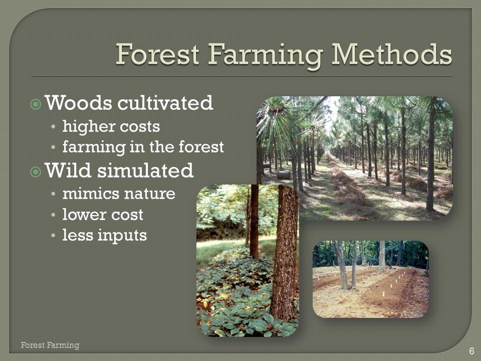 17  Popular  Local and regional markets  Ready markets  Seasonal Forest Farming