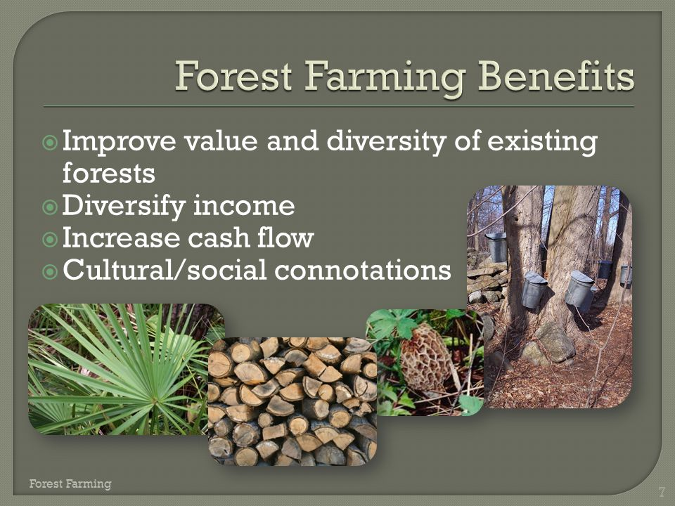  Improve value and diversity of existing forests  Diversify income  Increase cash flow  Cultural/social connotations 7 Forest Farming