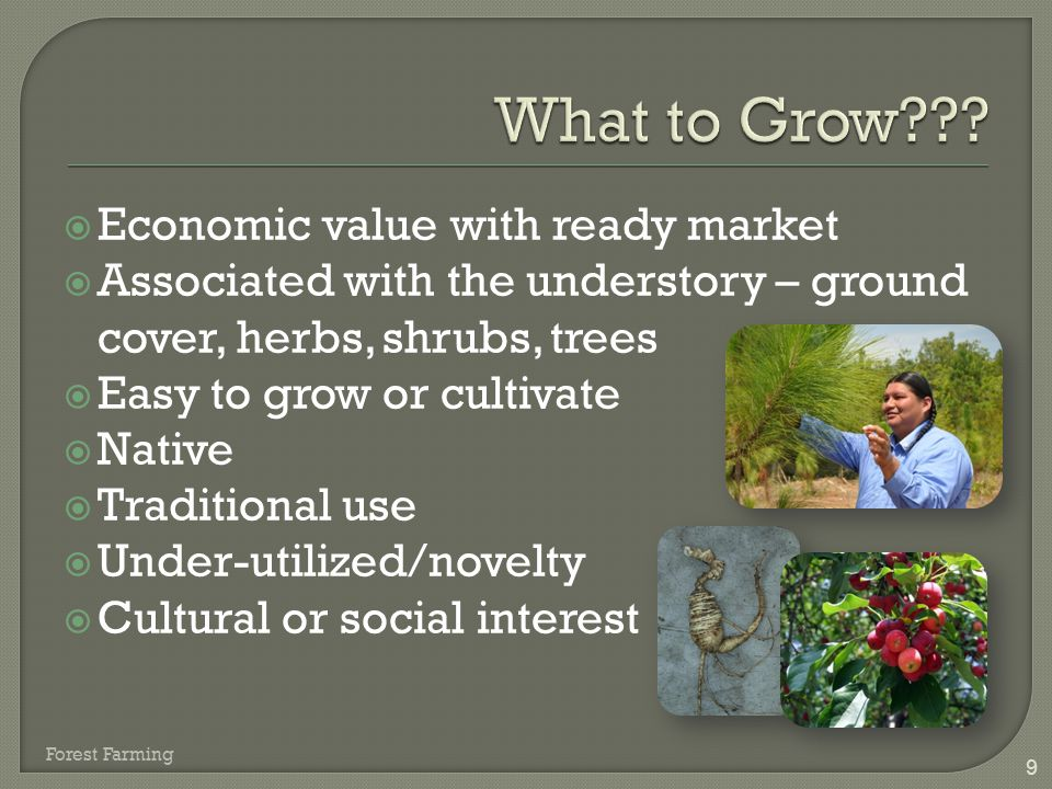  Economic value with ready market  Associated with the understory – ground cover, herbs, shrubs, trees  Easy to grow or cultivate  Native  Tradit