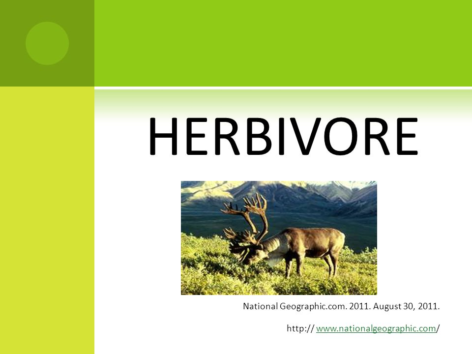 E ATING H ABITS Is the Caribou an Omnivore, Herbivore, or Carnivore