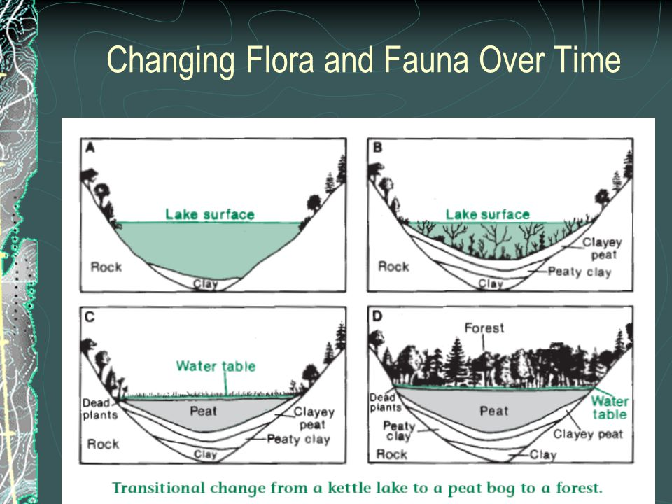 Changing Flora and Fauna Over Time