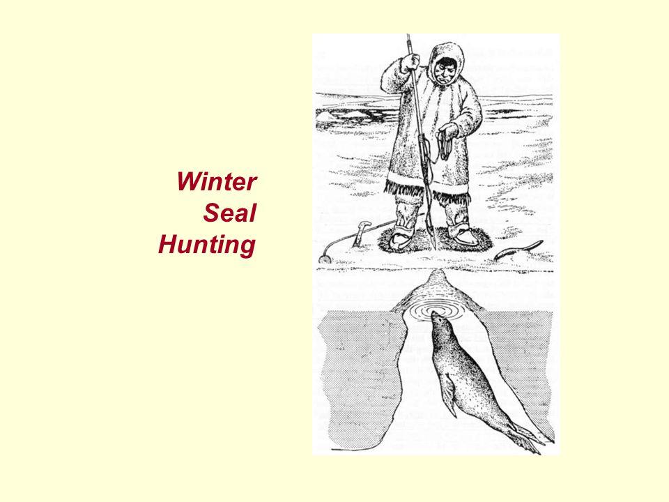 Winter Seal Hunting