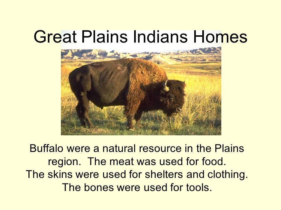 Buffalo were a natural resource in the Plains region. The meat was used for food. The skins were used for shelters and clothing. The bones were used f