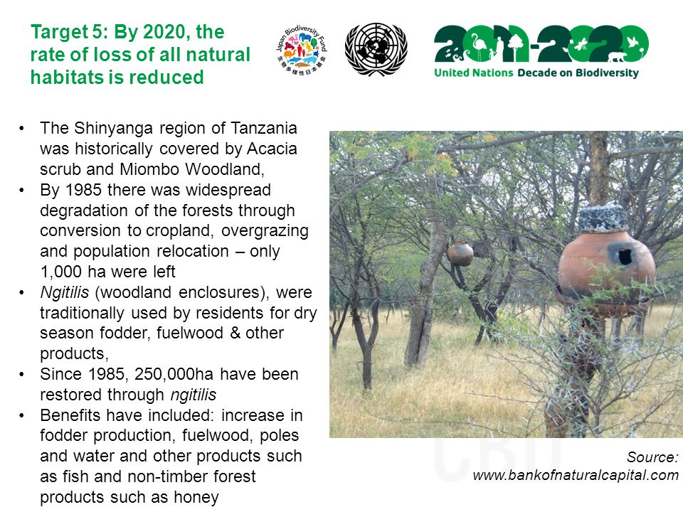 Target 5: By 2020, the rate of loss of all natural habitats is reduced The Shinyanga region of Tanzania was historically covered by Acacia scrub and Miombo Woodland, By 1985 there was widespread degradation of the forests through conversion to cropland, overgrazing and population relocation – only 1,000 ha were left Ngitilis (woodland enclosures), were traditionally used by residents for dry season fodder, fuelwood & other products, Since 1985, 250,000ha have been restored through ngitilis Benefits have included: increase in fodder production, fuelwood, poles and water and other products such as fish and non-timber forest products such as honey Source: www.bankofnaturalcapital.com