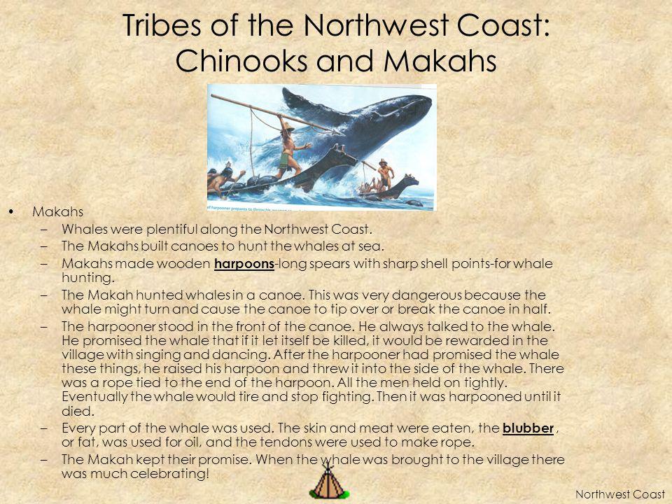 Tribes of the Northwest Coast: Chinooks and Makahs Makahs –Whales were plentiful along the Northwest Coast.