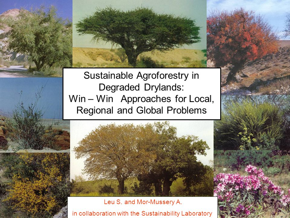 Sustainable Agroforestry in Degraded Drylands: Win – Win Approaches for Local, Regional and Global Problems Leu S.