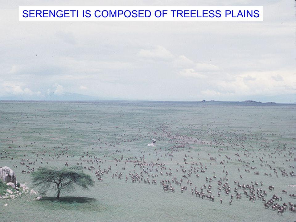 SERENGETI IS COMPOSED OF TREELESS PLAINS