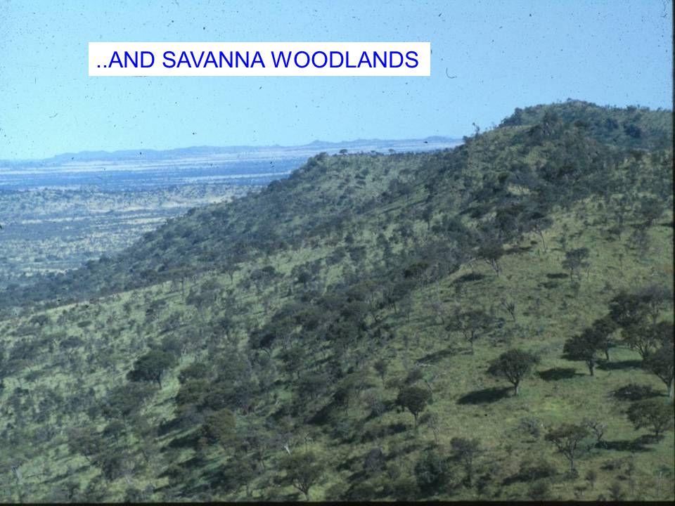 ..AND SAVANNA WOODLANDS