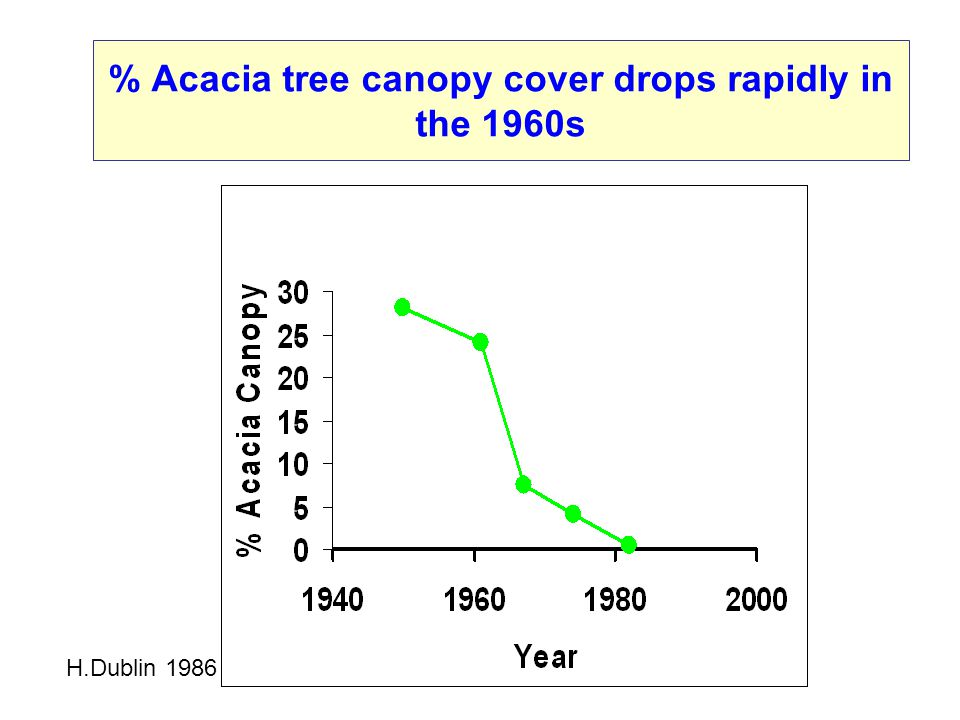 % Acacia tree canopy cover drops rapidly in the 1960s H.Dublin 1986