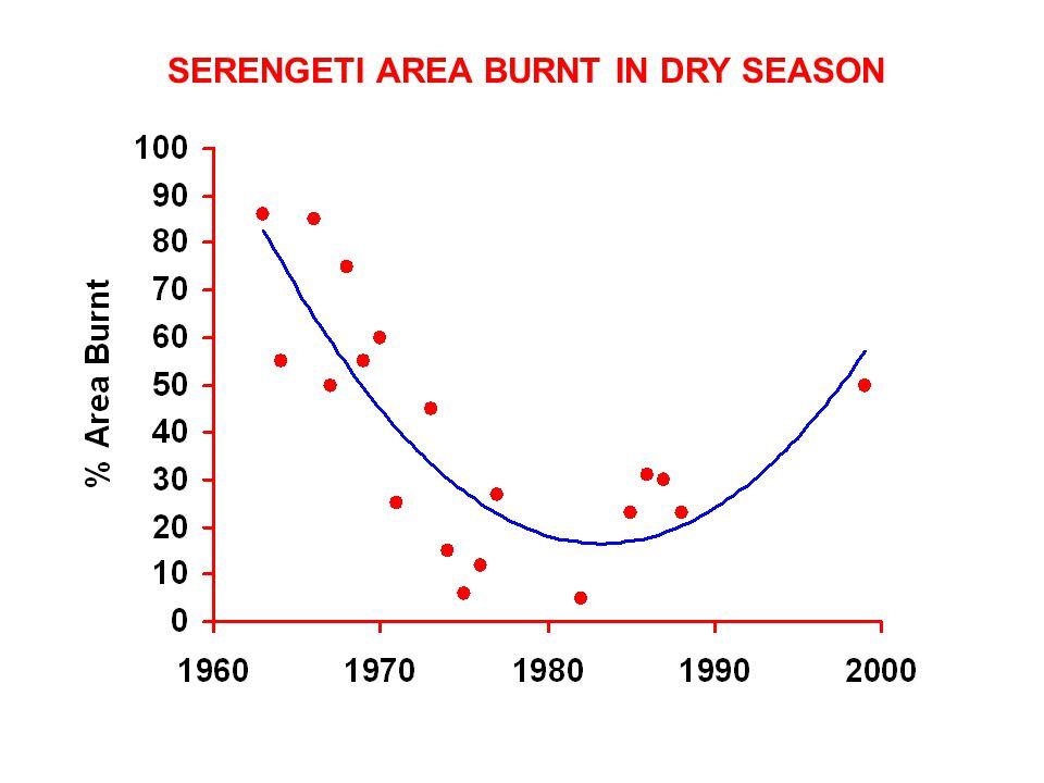 SERENGETI AREA BURNT IN DRY SEASON