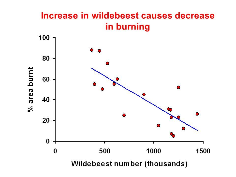 Increase in wildebeest causes decrease in burning