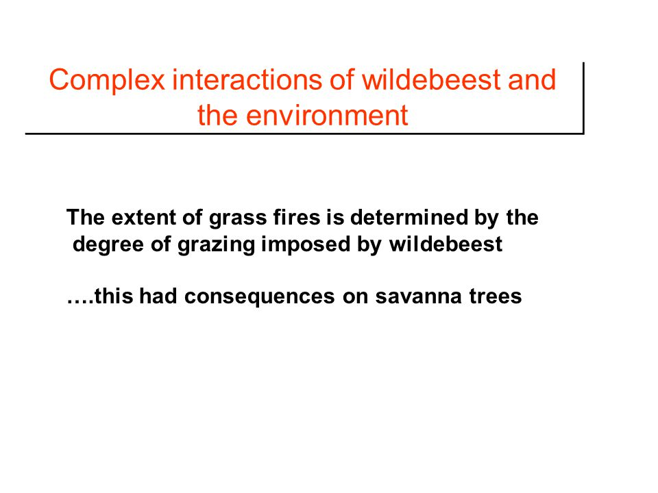 Complex interactions of wildebeest and the environment The extent of grass fires is determined by the degree of grazing imposed by wildebeest ….this had consequences on savanna trees