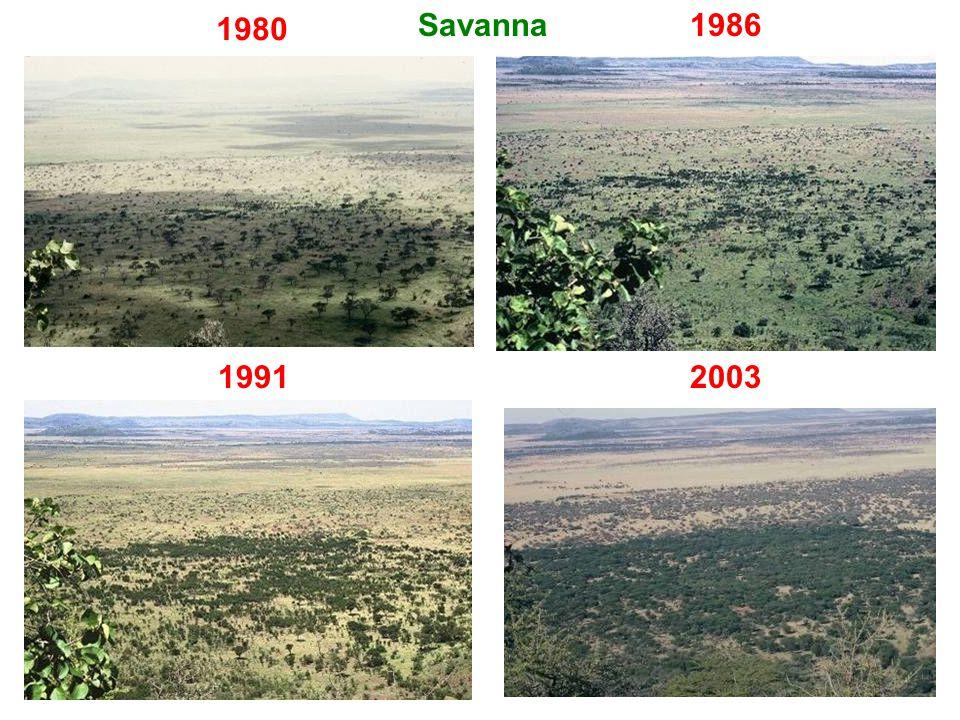 1980 1986 20031991 Savanna