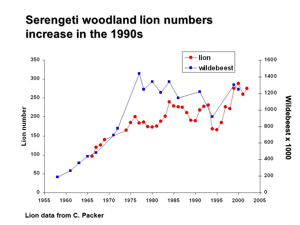Serengeti woodland lion numbers increase in the 1990s Wildebeest x 1000 Lion data from C. Packer