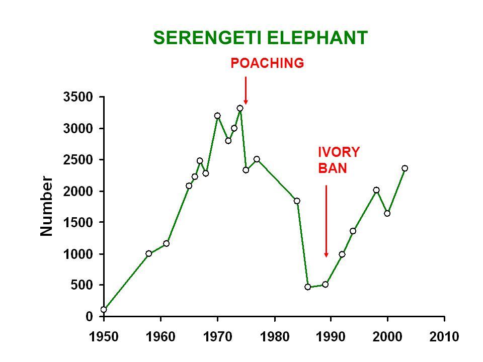 SERENGETI ELEPHANT POACHING IVORY BAN