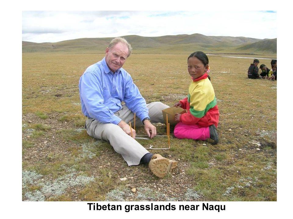 Tibetan grasslands near Naqu